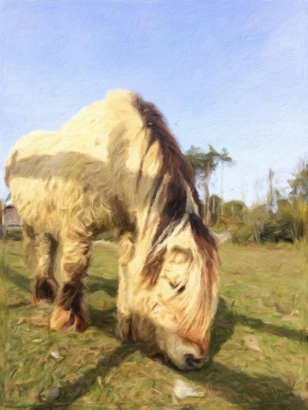 Pony Impresso